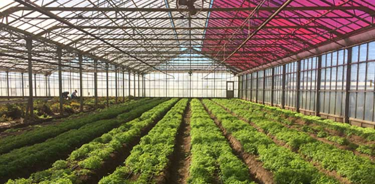 serra-solare-agricola